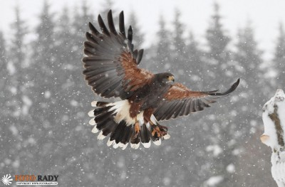 jak-fotit-ptaky-3