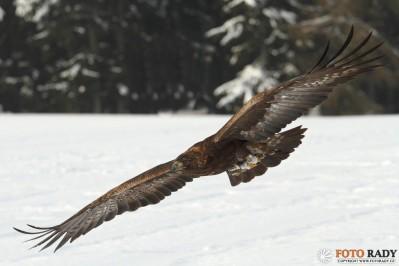 jak-fotit-ptaky-1