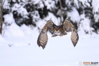 jak-fotit-ptaky-2