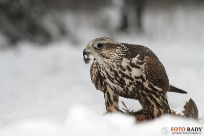 jak-fotit-ptaky-4
