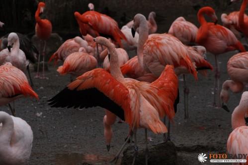 fotorady-090208-zoo-1