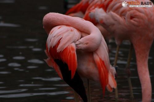 fotorady-090208-zoo-2