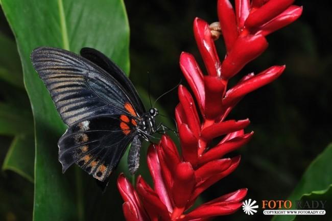 vystava-tropickych-motylu-2011-02
