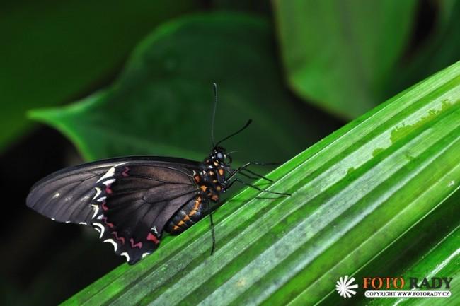 vystava-tropickych-motylu-2011-03
